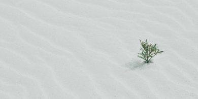 砂漠の生命
